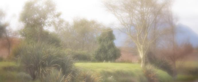 Stellenbosch Impressions